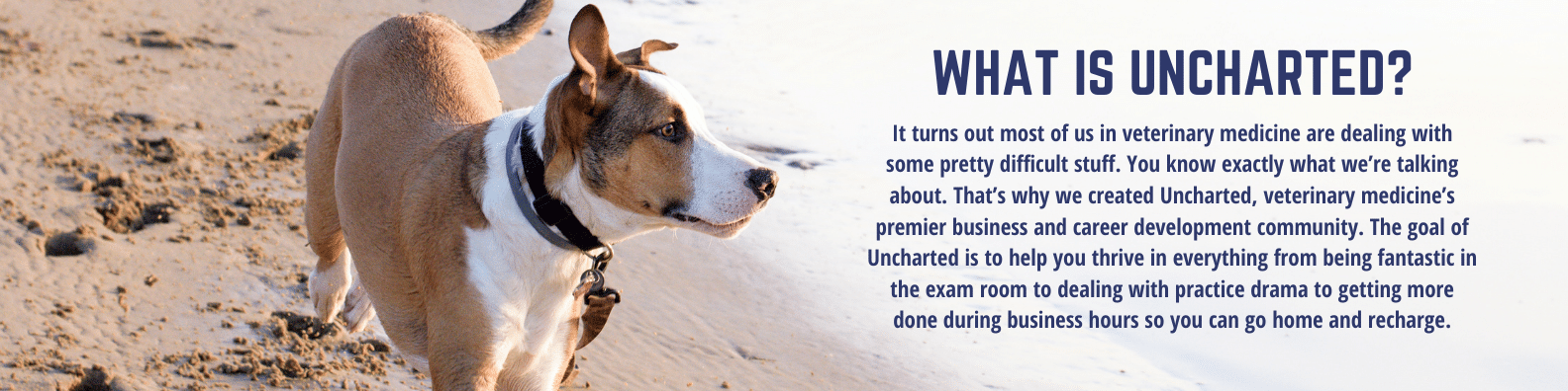 Photo of dog on beach, description of the Uncharted Veterinary Community