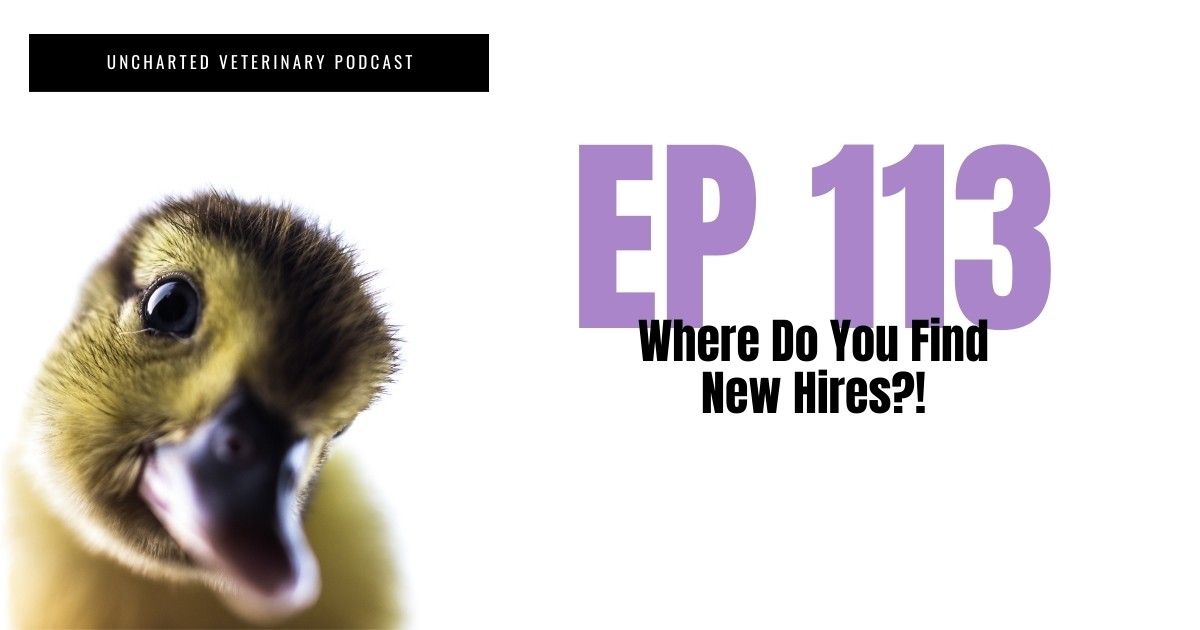 Podcast Find new hires veterinary medicine