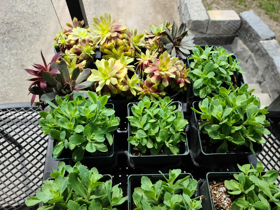 plants ready to be planted